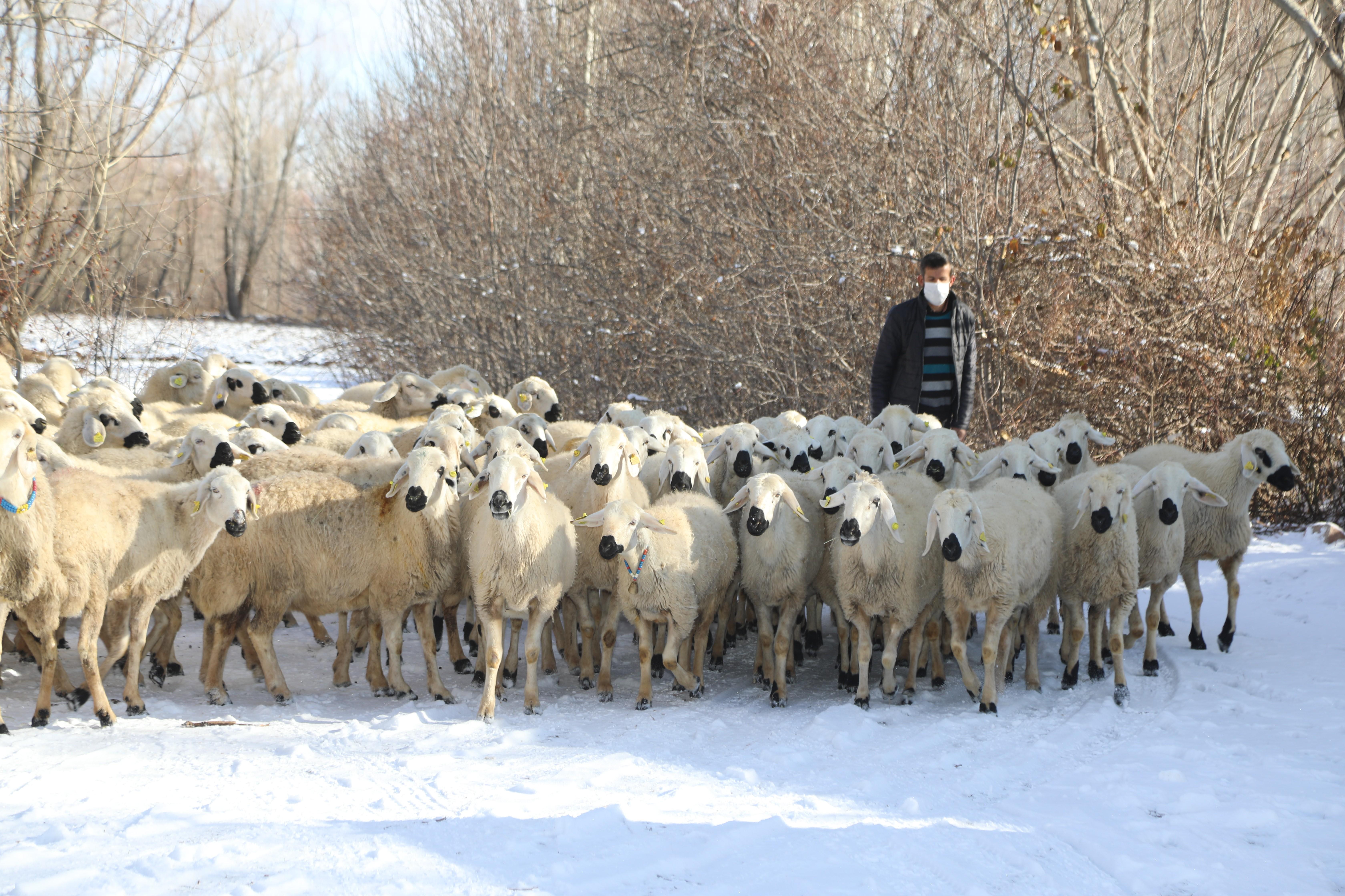 <p>Vali Salih Ayhan, 'Köyümde Yaşamak İçin Bir Sürü Nedenim Var' projesinde destek alan çiftçileri ziyaret ederek, TKDK tarafından şuana kadar 400 milyon liralık destek sağlandığını ve 2021 yılında da 385 projeye 185 milyon liralık destek sağlanacağını söyledi.</p> <p></p> <p>Sivas Valisi Salih Ayhan, Tarım ve Kırsal Kalkınmayı Destekleme Kurumu (TKDK) ile 'Köyümde Yaşamak için Bir Sürü Nedenim Var' projesi kapsamında destek alan çiftçileri ziyaret etti. Ziyaretlere İl Jandarma Komutanı İdris Tataroğlu, İl Tarım ve Orman Müdürü Seyit Yıldız, TKKD İl Koordinatörü Muhammed Ali Genç, Ziraat Odası Başkanı Hacı Çetindağ ile diğer yetkililer de katılım gösterdi. Ziyaretin ardından açıklamalarda bulunan Vali Salih Ayhan, Üretim ve istihdam odaklı bir anlayışımız var. Sivas'ta tarım ve hayvancılıkta çok ciddi çalışmalar yapılmakta. Bunlardan en önemli faaliyet kollarımızdan birisi de çiftçimizi doğrudan destek olan TKDK, şuana kadar yaklaşık olarak 400 milyon TL bir destek sağladı. 2020 yılı içerisinde de yaklaşık 40 milyon liralık 136 projeye destek sağladı. Bunları da sahada ziyaret ederek görüyoruz ifadelerini kullandı.<br /><br /></p> <p><strong>En çok destek alan il Sivas</strong></p> <p></p> <p>Vali Ayhan, en çok destek alan ilin Sivas olduğunu ve 2021 yılında da yaklaşık 385 projeye 185 milyon liralık destek sağlanacağını belirterek, Çiftçimizin moral ve motivasyonunu yüksek tutmak istiyoruz. Devletimizin de desteğinin sahada nasıl karşılık aldığını görüyoruz. 2021 yılı için de hazırlıklar yapıldı. Yaklaşık olarak 385 projeye 185 milyon liralık destek sağlanacak. En çok proje yapan ve en çok da destek alan il olduğumuzu da söylemek istiyorum. 385 projeden 166'sının işlemleri bitti. Geri kalan projelerin evrak işlemleri bitmektedir. Bunlar da bittiği zaman yaklaşık 185 milyon liralık destek sağlanmış olacak. Çiftçimize destek olarak, tarımsal ve hayvancılık alt yapısını güçlendirerek modern tarım ekipmanlarını da kullanarak daha fazla üretim sağlamak istiyor ve daha f