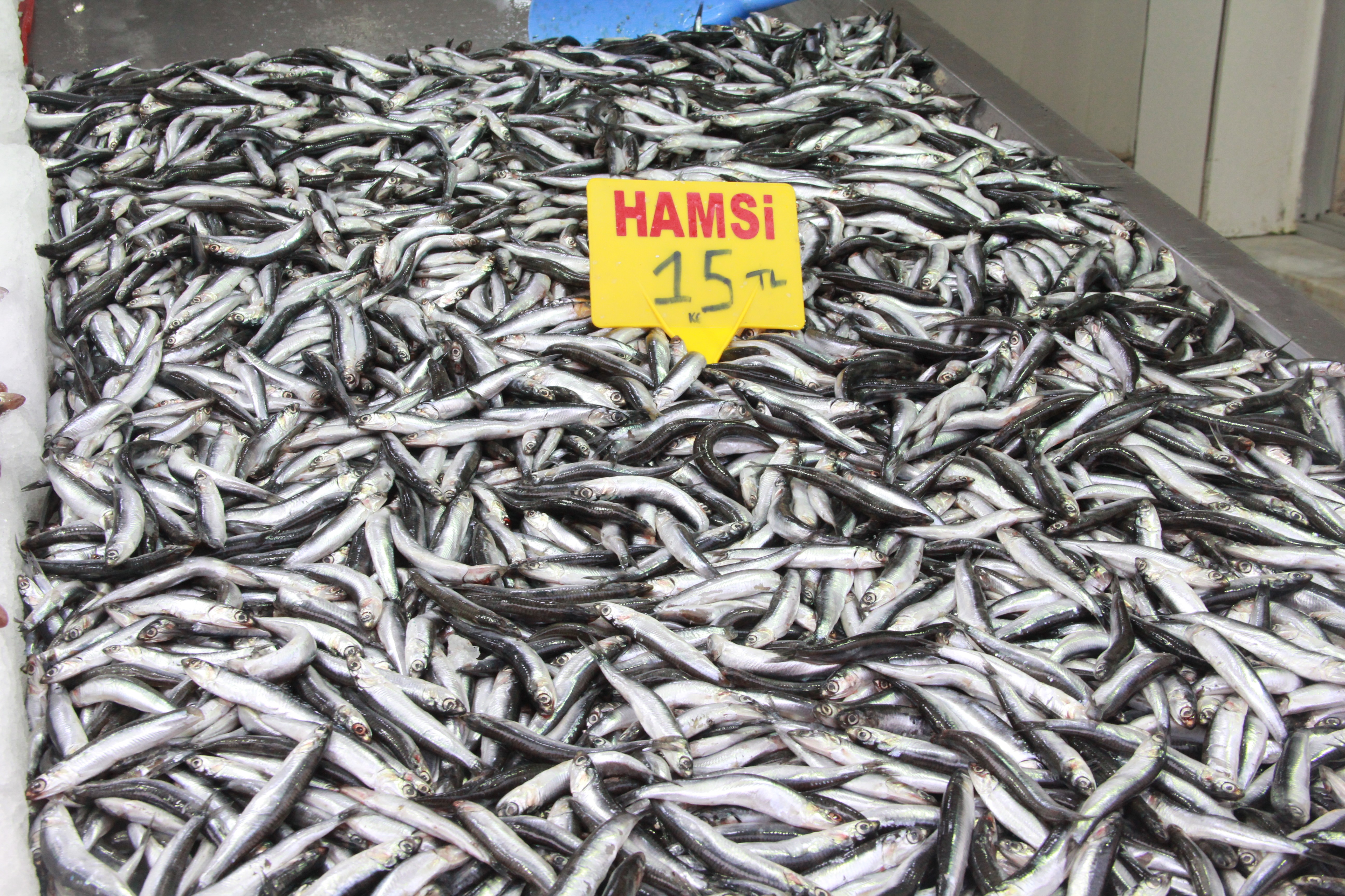 """<p>Tarım ve Orman Bakanlığı tarafından Karadeniz'de avlanan hamsi balıklarında yasal avlanabilir boy uzunluğunun altındakilerin oranının artması nedeniyle hamsi avına getirilen 10 günlük yasağın ilk gününde Sinop'ta fiyatlar etkilenmedi.<br /><br /></p> <p><strong>Buzhane hamsilerini çıkaracağız</strong></p> <p></p> <p>Hamsi avına getirilen yasak ilk gün tezgahlara yansımadı. Ancak ilerleyen günlerde bir artış olabilir. Balık satıcısı Ahmet Gür, """"Fiyatlar ilk günde etkilenmedi. Hamsiyi kilosu 15 TL'den satmaya devam ediyoruz. Ama bundan sonra yükselebilir. Buzhane hamsilerini çıkaracağız artık. Başka çaresi yok. Bakanlığın verdiği yasağa uymak durumundayız. Bu yasak ilk defa bu dönemde oldu. Zargana 30 TL, mezgit 25 TL, barbun 35 TL, hamsi 15 TL'den satılmaya devam ediyor"""" dedi.</p>"""