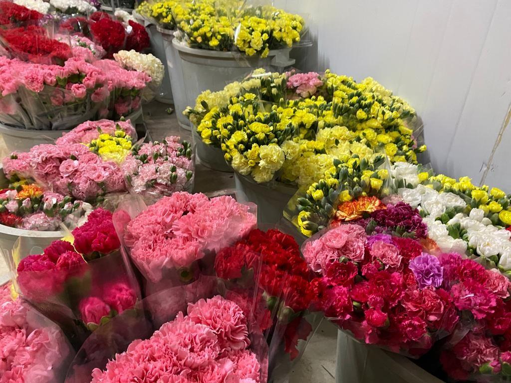 """<p>Kesme çiçek sektöründe Hollanda, İngiltere, Almanya ve Balkan ülkeleri başta olmak üzere 83 ülkeye çiçek ihracatı yapan Türkiye, Kasım ayı sonu verilerine göre, 102 milyon dolar ihracat ile pandemiye meydan okudu. Sektörde yılbaşı satışlarıyla birlikte 110 milyon dolar ve 500 milyon dal ihracat hedefleniyor.</p> <p></p> <p>Antalya'nın Aksu İlçesi yaş sebze ve meyve üretiminde olduğu kadar kesme çiçek sektöründe de söz sahibi olmaya devam ediyor. İlçede 700 dekar alanda yaklaşık 1 milyon dal kesme çiçek üretimi yapılarak, başta Hollanda, İngiltere, Almanya ve Balkan ülkeleri olmak üzere birçok ülkeye ihraç ediliyor.<br /><br /></p> <p><strong>Üretimin yüzde 15'i Aksu'da</strong></p> <p></p> <p>Kesme çiçek ihracatı sektöründe Antalya'nın Aksu İlçesi artık söz sahibi. Kesme çiçek alanında ülke genelinde 10 bin dekar arazide üretim yapılırken, bu üretimin yüzde 85'i Antalya genelinde, yüzde 15'i de Aksu'da yapılıyor. Avrupa ve Balkan ülkelerine ihraç edilen ürünlerden en fazla rağbet görenler türler, Karanfil, Gerbera ve Şakayık.<br /><br /></p> <p><strong>""""Yılbaşı satışlarıyla 110 milyon dolar ihracat rakamına ulaşacak""""</strong></p> <p></p> <p>Kesme çiçek sektöründe 83 ülkeye ihracatın gerçekleştiğini kaydeden Süs Bitkileri İhracatçılar Dernek Başkanı Harun Yeter, """"Hollanda, İngiltere, Almanya ve Balkan ülkeleri başta olmak üzere 83 ülkeye çiçek ihracatını gerçekleştiriyoruz. Bu yıl, ülkemizden kasım ayı sonu verilerine göre, 102 milyon dolar ihracat gerçekleşti. Yılbaşı satışlarıyla birlikte 110 milyon dolar ve 500 milyon dal ihracat rakamını yakalayacağız"""" şeklinde açıklamalarda bulundu.<br /><br /></p> <p><strong>""""Satışlarımız yıl boyu devam ediyor""""</strong></p> <p></p> <p>Kesme çiçekte özel günlerde satışların arttığına dikkat çeken Yeter, """"Bizim üretimimiz ve satışlarımız yıl boyu devam ediyor. Süs bitkisi bir sanayi üretimi değil, sadece özel günler için üretim yapmıyoruz. Bir yıl boyunca aynı kalite ve verimlilikte ürün alıyoruz. Özel günlerde stoklarımızı ar"""